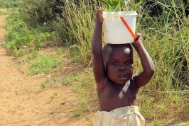 A Small Child Carries Water Home